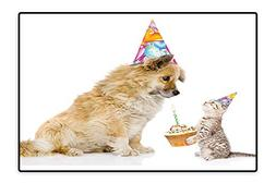 Area Rug Cat and Dog Human Best Friend Party with Cupcake an