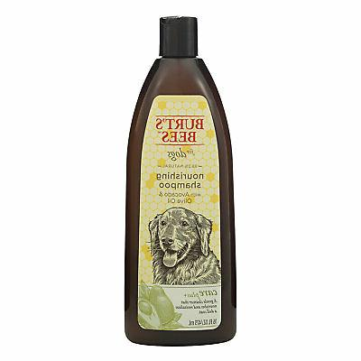care plus oil shampoo dry