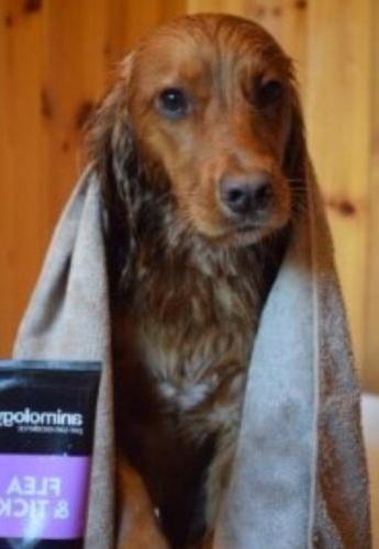 flea and tick puppy dog shampoo 100