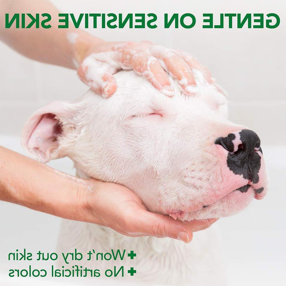 Dog Veterinarian Skin Care