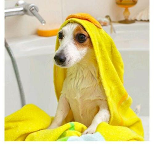 Vet's Shampoo for Dogs | Soothes Dog | Cleans, M