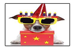 Living Room Rug Party Dog with Sunglasses and Cone Hat Boxes