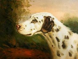 'a Spotty Dog' Oil Painting, 18x24 Inch / 46x60 Cm ,printed